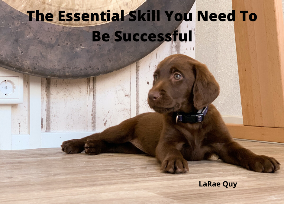 The Essential Skill You Need To Be Successful